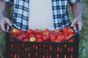 Tomatoes from Garden, Cincinnati, Ohio