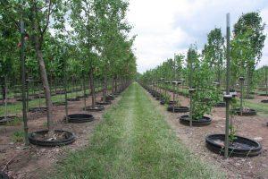 plant delivery and installation in cincinnati, ohio