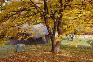 tree care in Cincinnati, ohio