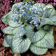 Shade Plants in Cincinnati, Ohio
