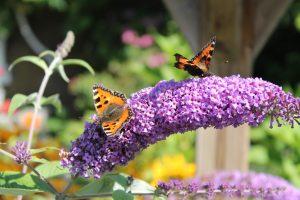 Butterfly Garden in Cincinnati,Ohio