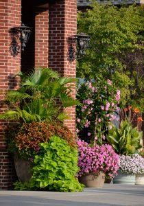 Container Garden in Cincinnati, Ohio
