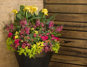 Personalized Container Garden
