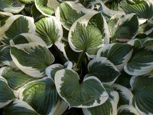Shade Plant in Cincinnati, Ohio