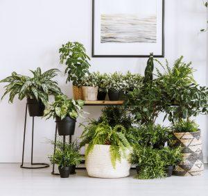 indoor plants in Cincinnati, Ohio
