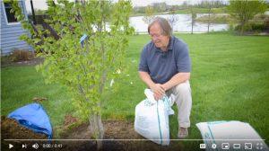 How to Mulch Trees, Cincinnati, Ohio