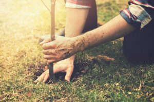 Fertilizing New Trees in Cincinnati, Ohio