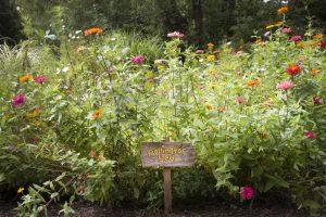 Bee Friendly Garden, Cincinnati, Ohio