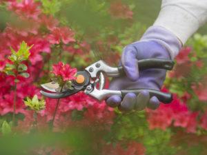 Fall Gardening in Cincinnati, Ohio