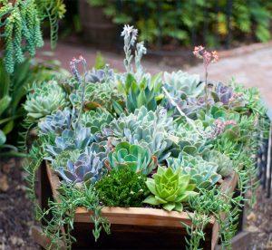 Succulent Garden Design in Mason, Ohio