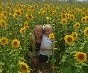 Natorp's Sunflower Field in Deerfield Township, Ohio