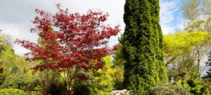 How to water new trees in Cincinnati, Ohio